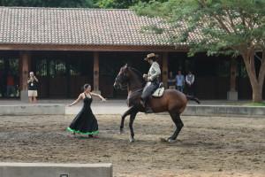 Flamenco horse show