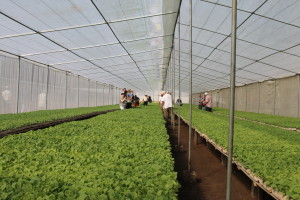 Nursery at Plasencia Cigar Farm